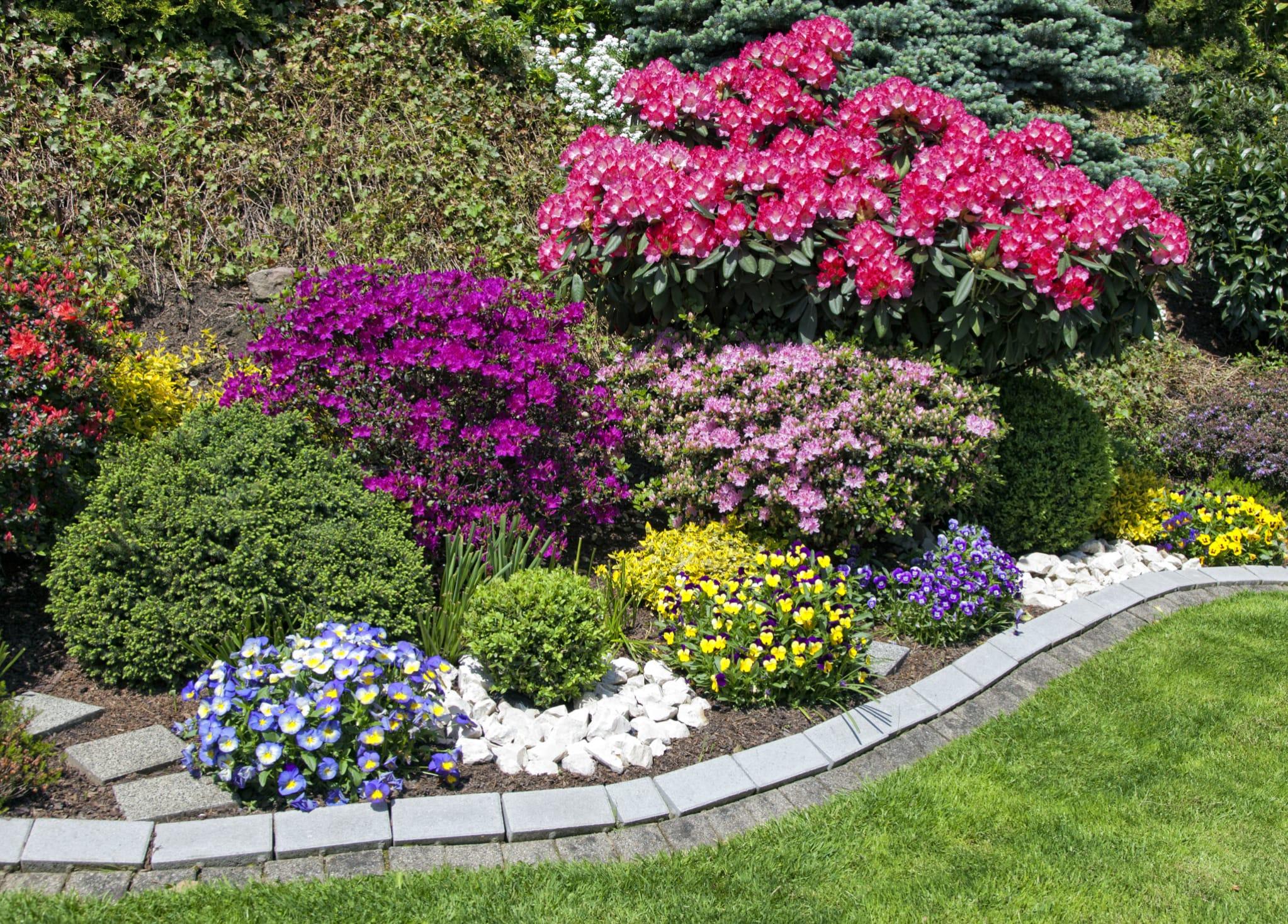 Fiori Da Balcone Ombra piante da giardino - floricoltura burlon