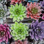Piante grasse - Floricoltura Burlon