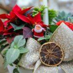 Piante di Natale - Floricoltura Burlon
