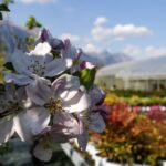 Piante vivaio - Floricoltura Burlon
